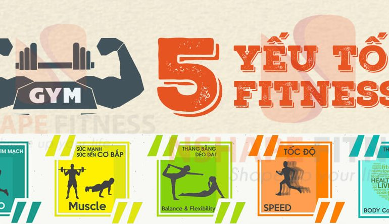 Fitness thực chất là gì?
