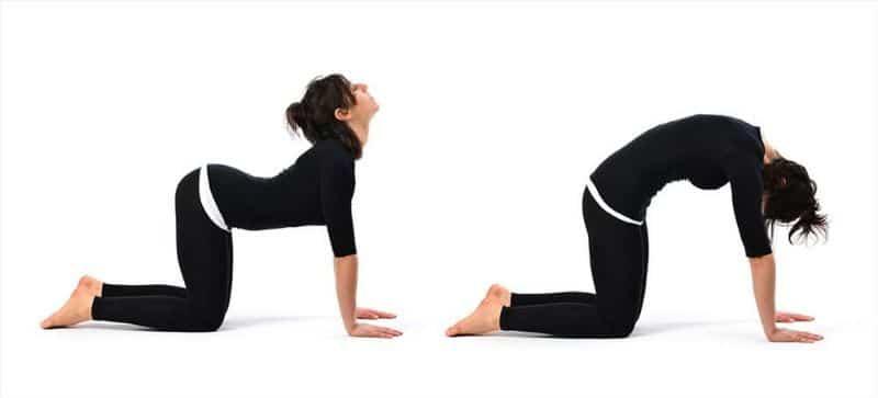 Cat - Cow là bài tập giúp cơ thể được kéo giãn toàn bộ cột sống và phần lưng