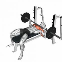 Bài tập đẩy tạ trên cổ sẽ tác động trực tiếp lên phần ngực trên và phần trước vai