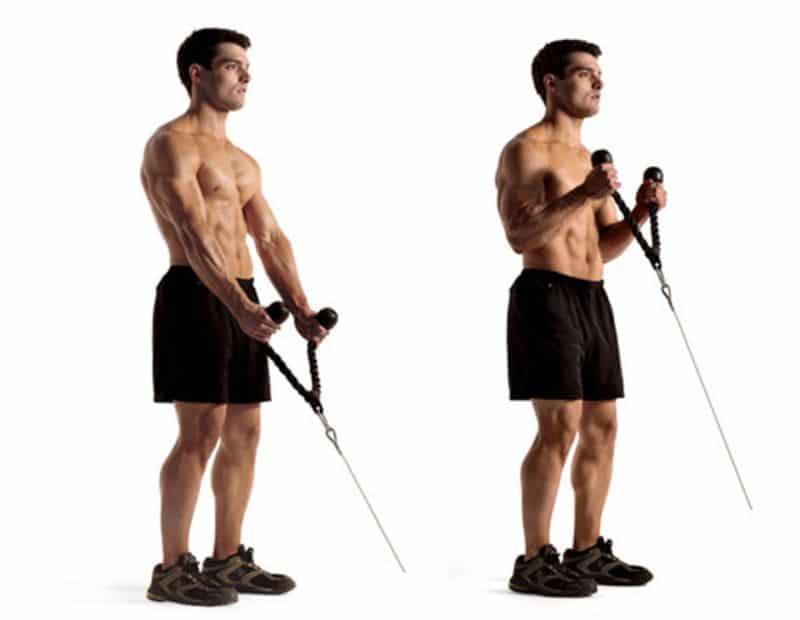 Bài tập gập dây cáp sẽ tạo nên sự rắn chắc cho hai cánh tay bằng cách tác động trực tiếp vào bắp trên cẳng tay