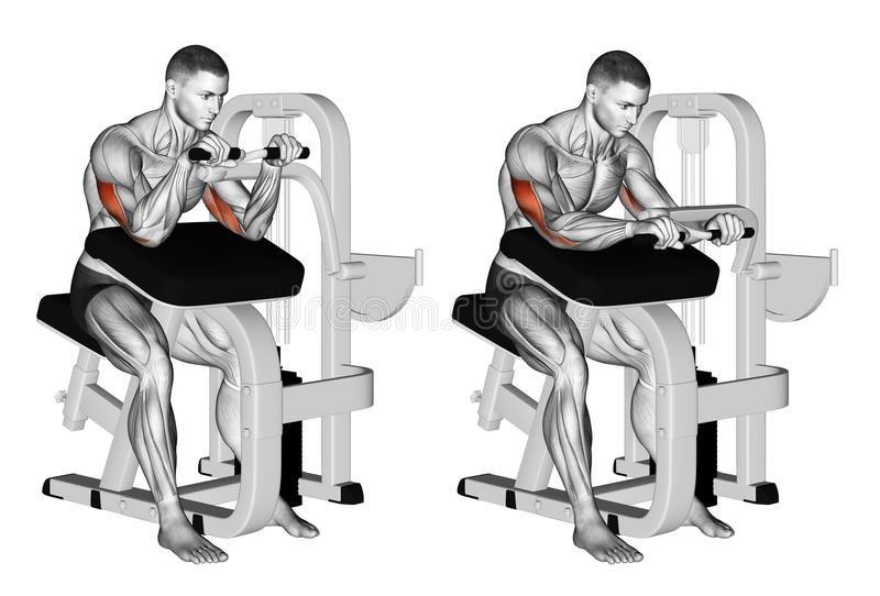 Selectorized Triceps Extension - Bài tập cho cơ tay sau